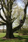 Premiere Tree Services of Lilburn, GA in Lilburn, GA, photo #5