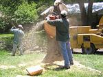 Premiere Tree Services of Lilburn, GA in Lilburn, GA, photo #6