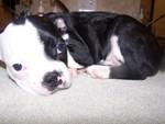 Otay Pet Vets in Chula Vista, CA, photo #3