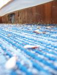 Blitz Pest Control in Saginaw, MI, photo #1