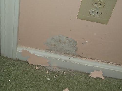 Termite_inspection_service_marble_hill_ga