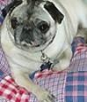Above & Beyond Pet Sitting, LLC in Casselberry, FL, photo #3