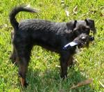 Above & Beyond Pet Sitting, LLC in Casselberry, FL, photo #4