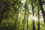 A-1 Arborists Tree Svc in Orlando, FL, photo #1