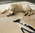 Ernest's Carpet Cleaning Services in Oklahoma City, OK, photo #1