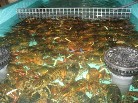 Best_lobster_cambridge_ma