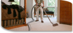 Anderson Certified Cleaning Technicians in Chicago, IL, photo #2