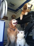 aRomatherapy Mobile Pet Grooming in Los Angeles, CA, photo #1