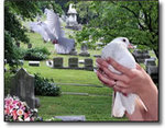 White Dove Memories of Houston in Montgomery, TX, photo #1
