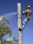 Bestway Tree Service in Glendale, CA, photo #1