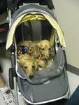 Mission Pet Emergency in San Antonio, TX, photo #10