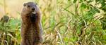Anderson Wildlife Control LLC in Prospect, CT, photo #3