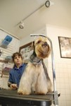 Temple Terrace Animal Hospital in Tampa, FL, photo #9