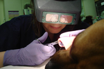 Clairemont Village Pet Clinic in San Diego, CA, photo #4