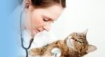 DPC Veterinary Hospital in Davie, FL, photo #8