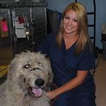 DPC Veterinary Hospital in Davie, FL, photo #9