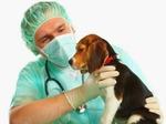 DPC Veterinary Hospital in Davie, FL, photo #11