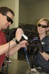 Raintree Pet Resort + Medical Center in Scottsdale, AZ, photo #19