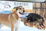 Raintree Pet Resort + Medical Center in Scottsdale, AZ, photo #21