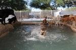Raintree Pet Resort + Medical Center in Scottsdale, AZ, photo #23