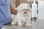Flushing Veterinary Hospital in Flushing, NY, photo #6