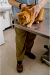 Flushing Veterinary Hospital in Flushing, NY, photo #7
