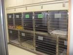 Animal Health Clinic in Fargo, ND, photo #5