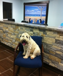 Fort Lauderdale Veterinary Center in Fort Lauderdale, FL, photo #4