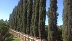 Moon Valley Nurseries Riverside in Riverside, CA, photo #14