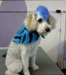 Fetching Grooming & Pet Boutique in Scranton, PA, photo #11