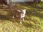 Holm, Patracia J, DVM - Auburn Animal Clinic Inc in Rockford, IL, photo #2