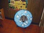 Woodside Animal Clinic in Royal Oak, MI, photo #12