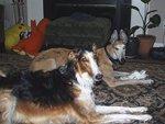 Woodside Animal Clinic in Royal Oak, MI, photo #14