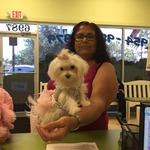 DPC Veterinary Hospital in Davie, FL, photo #17