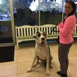 DPC Veterinary Hospital in Davie, FL, photo #19