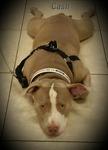 DPC Veterinary Hospital in Davie, FL, photo #22