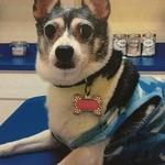 DPC Veterinary Hospital in Davie, FL, photo #23