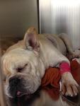 DPC Veterinary Hospital in Davie, FL, photo #25