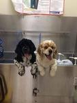Doral Centre Animal Hospital in Doral, FL, photo #37