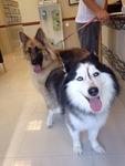 Doral Centre Animal Hospital in Doral, FL, photo #39