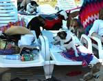 Cornerstone Animal Hospital in North Richland Hills, TX, photo #20