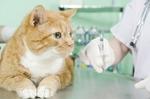 ABC Veterinary Hospital - Uptown in San Diego, CA, photo #23