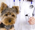 ABC Veterinary Hospital - Uptown in San Diego, CA, photo #26