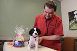 Raintree Pet Resort + Medical Center in Scottsdale, AZ, photo #46