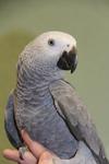 Raintree Pet Resort + Medical Center in Scottsdale, AZ, photo #50