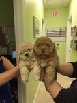 DPC Veterinary Hospital in Davie, FL, photo #29
