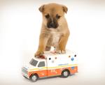 DPC Veterinary Hospital in Davie, FL, photo #36
