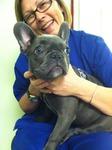 DPC Veterinary Hospital in Davie, FL, photo #38