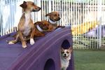 Raintree Pet Resort + Medical Center in Scottsdale, AZ, photo #66