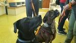 ABC Veterinary Hospital - Uptown in San Diego, CA, photo #37